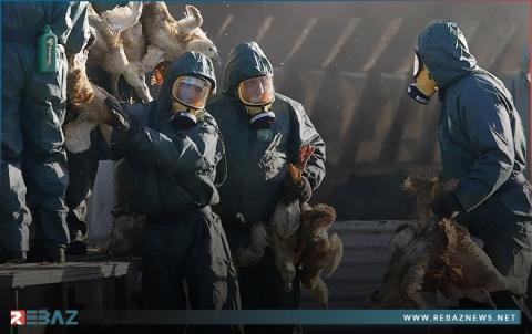 الصحة العالمية تكشف مدى خطورة تفشي إنفلونزا الطيور بين البشر