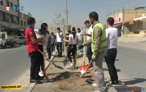 طلبة كوردستان سوريا يقومون بزراعة 100 شجرة زيتون في مدينة هولير
