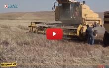كوردستان سوريا.. بدء ظاهرة حرق حقول القمح والشعير